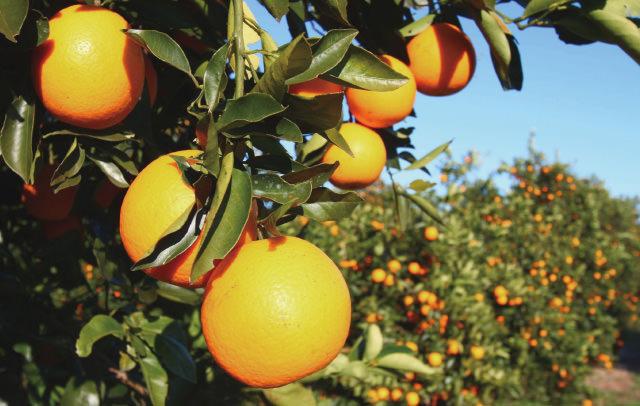 マンダリンオレンジ アロマ