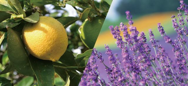 レモン ラベンダー